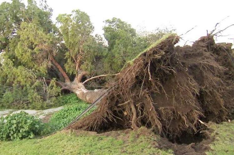 Tree Removal Prackos Landscaping