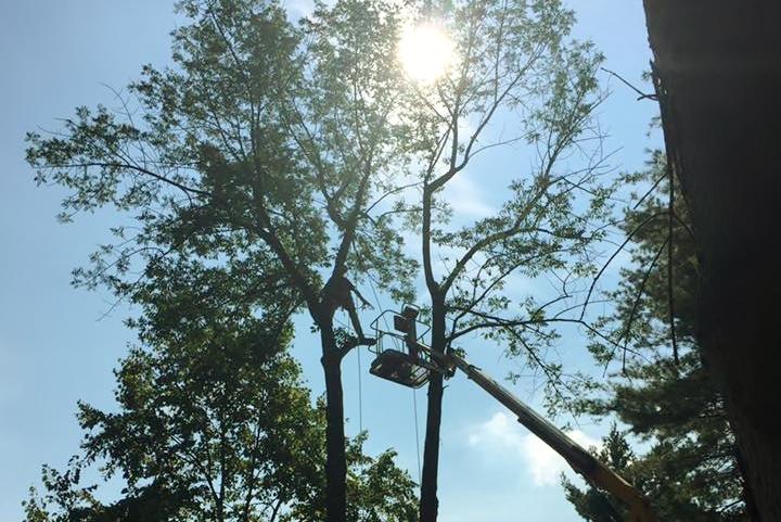 Tree Trimming Prackos Landscaping Seville
